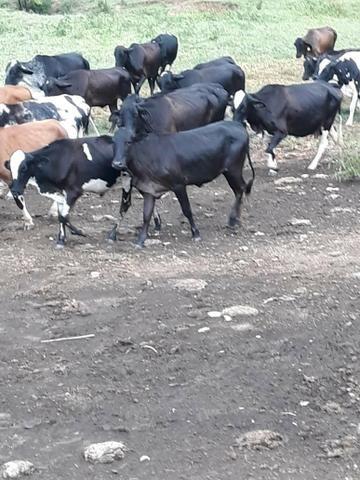 Fazenda 62 alqueires mg, aceita troca - Foto 11