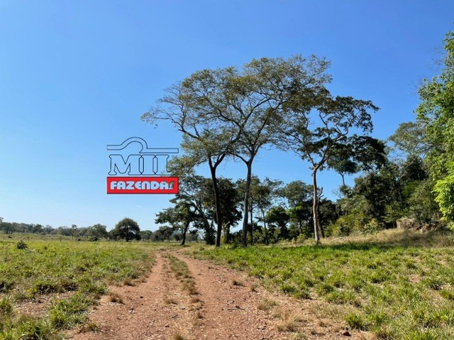 Fazenda 150 Alqueires ( 726 hectares ) Formoso do Araguaia-TO - Foto 17