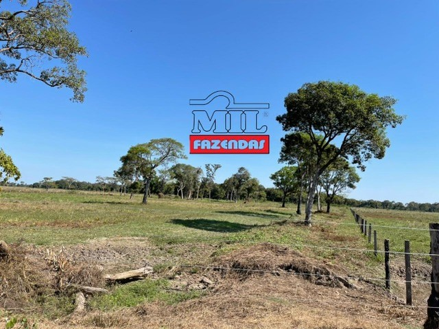 Fazenda 150 Alqueires ( 726 hectares ) Formoso do Araguaia-TO - Foto 18