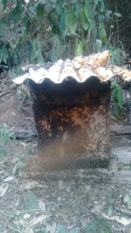 Caixas de abelha produzindo