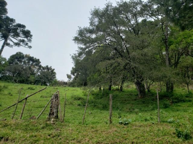 Lindo Sítio com Vista Para o Vale Rio Rufino/Urupema - Foto 9