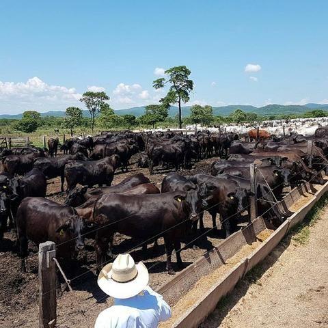 Fazenda em Miranda Corumbá - MS - Foto 3