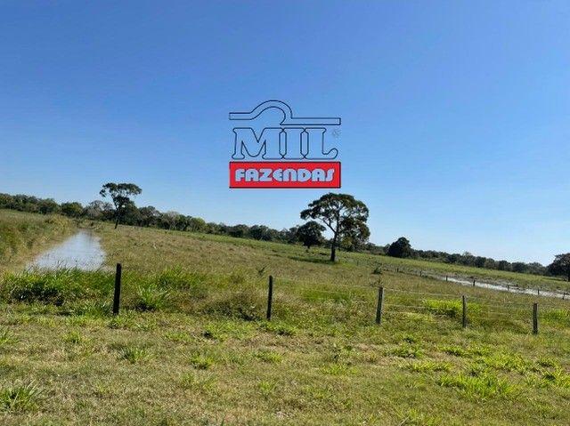 Fazenda 150 Alqueires ( 726 hectares ) Formoso do Araguaia-TO - Foto 5
