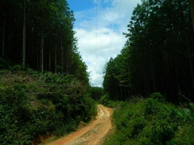 Área com 38 hectares linda - Foto 2