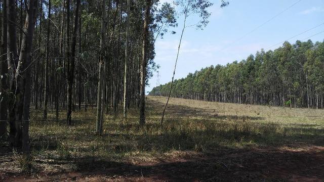 Fazenda em Água Clara - silvipastoril - Foto 5