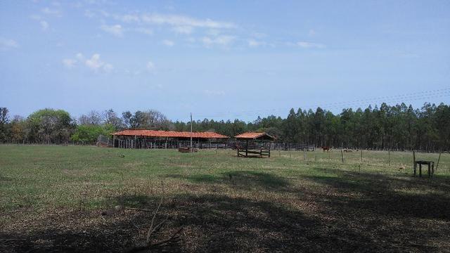 Fazenda em Água Clara - silvipastoril - Foto 14
