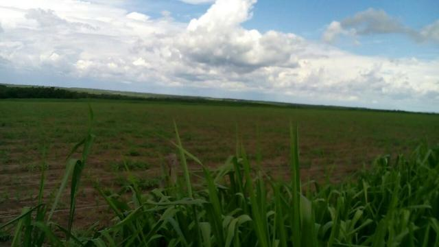 Bela fazenda de 157 hectares com gado leiteiro em Aguá -Branca -Pi - Foto 2