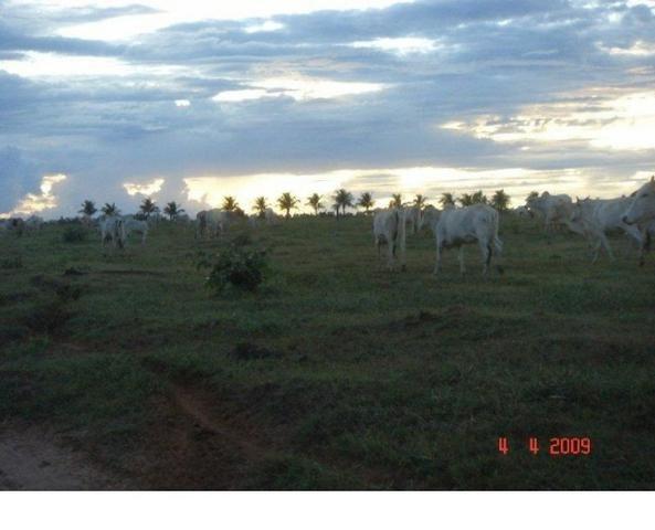 1200 hectares, pecuária, Diamantino-MT, troca-se por imóveis em MT - Foto 6