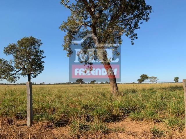 Fazenda 22 Alqueires (106 hectares) Nova Xavantina-MT - Foto 9