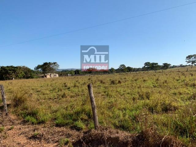 Fazenda 22 Alqueires (106 hectares) Nova Xavantina-MT - Foto 4