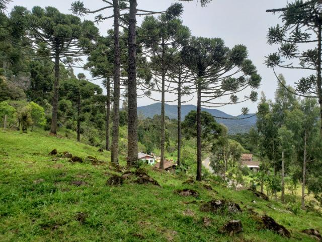 Lindo Sítio com Vista Para o Vale Rio Rufino/Urupema - Foto 4