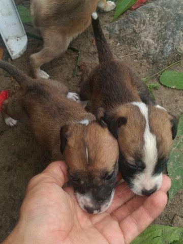 Doando cachorrinhos viralata  - Foto 2