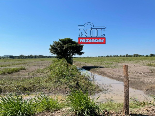 Fazenda 150 Alqueires ( 726 hectares ) Formoso do Araguaia-TO - Foto 16