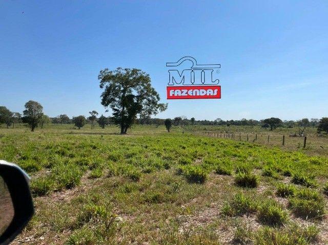 Fazenda 150 Alqueires ( 726 hectares ) Formoso do Araguaia-TO - Foto 4