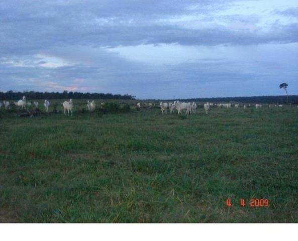 1200 hectares, pecuária, Diamantino-MT, troca-se por imóveis em MT - Foto 3