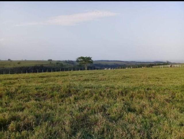 Fazenda 648 alqueires Pecuária - Echaporã- SP - F200503 - Foto 13