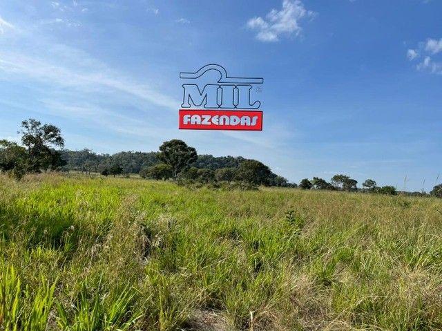 Fazenda 150 Alqueires ( 726 hectares ) Formoso do Araguaia-TO - Foto 12