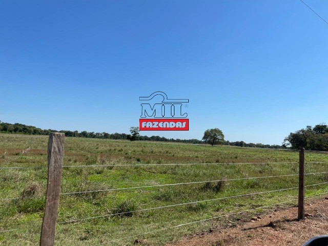 Fazenda 150 Alqueires ( 726 hectares ) Formoso do Araguaia-TO - Foto 10