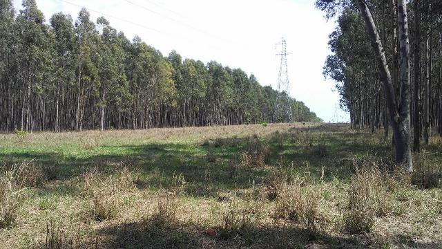 Fazenda em Água Clara - silvipastoril - Foto 6