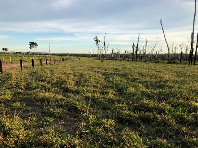 68 alqueires, 58 alqueires de pasto, Nova Marilãndia-Pecuama-MT - Foto 3