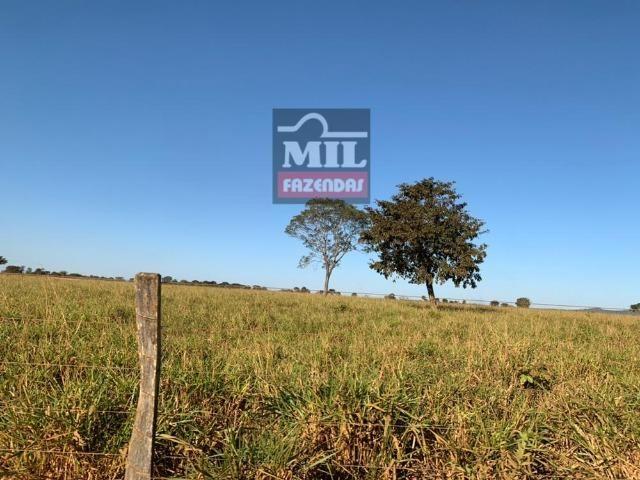 Fazenda 22 Alqueires (106 hectares) Nova Xavantina-MT - Foto 10