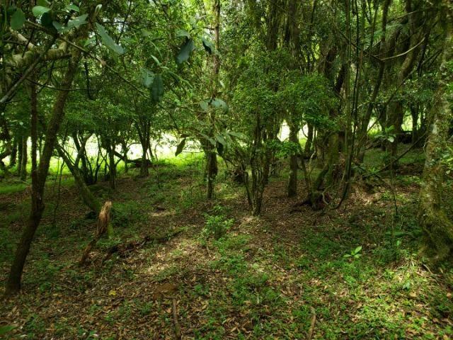 Lindo Sítio com Vista Para o Vale Rio Rufino/Urupema - Foto 6