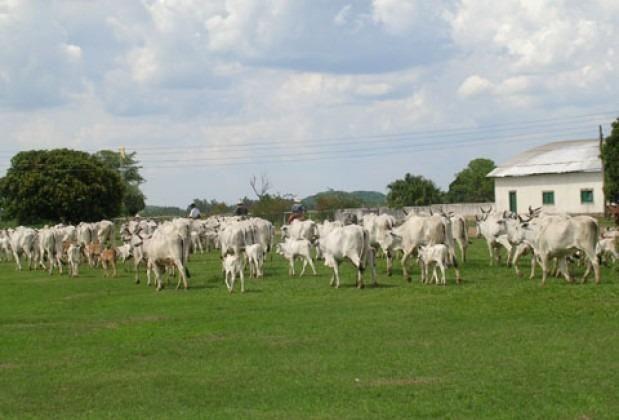 Fazenda em Miranda Corumbá - MS