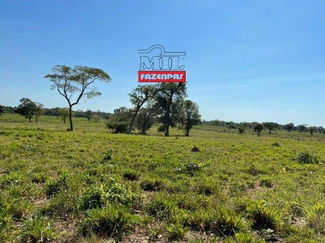 Fazenda 150 Alqueires ( 726 hectares ) Formoso do Araguaia-TO - Foto 13