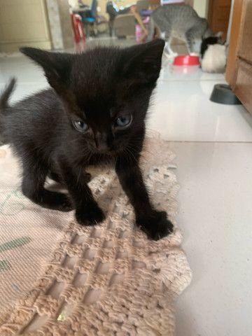 Filhotes gatos  - Foto 5