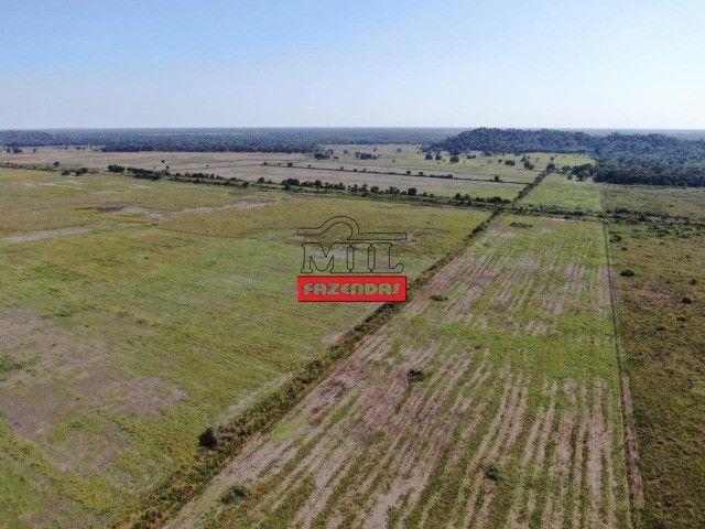Fazenda 150 Alqueires ( 726 hectares ) Formoso do Araguaia-TO - Foto 15