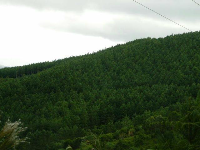 Área com 38 hectares linda - Foto 5