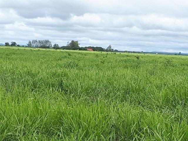 Bela fazenda de 157 hectares com gado leiteiro em Aguá -Branca -Pi - Foto 8