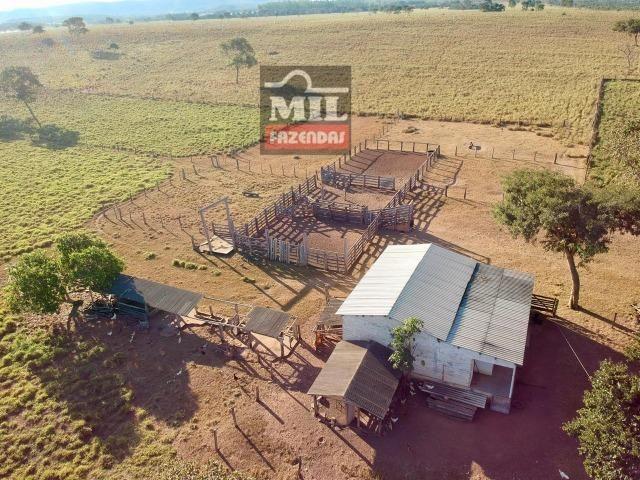 Fazenda 22 Alqueires (106 hectares) Nova Xavantina-MT - Foto 19