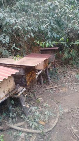 Caixas de abelha produzindo - Foto 2
