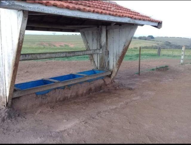 Fazenda 648 alqueires Pecuária - Echaporã- SP - F200503 - Foto 5