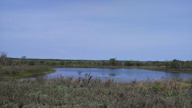 Fazenda em Água Clara - silvipastoril - Foto 20