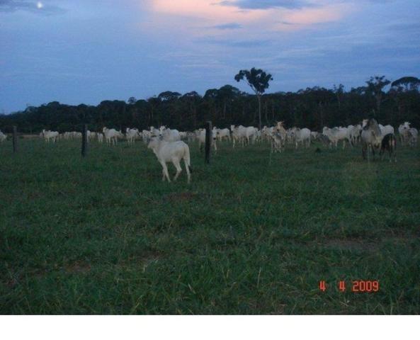 1200 hectares, pecuária, Diamantino-MT, troca-se por imóveis em MT - Foto 4