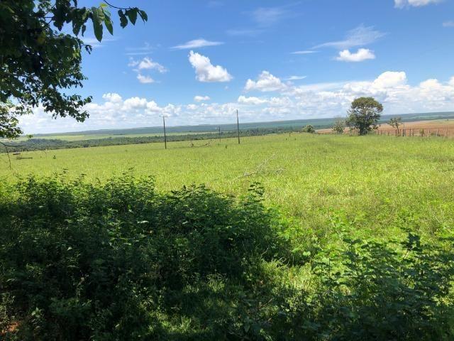 295 Hectares, 240 Hectares aberta, para soja, Região BR-163, próximo Mutum - Foto 3