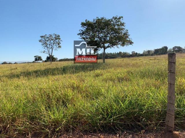Fazenda 22 Alqueires (106 hectares) Nova Xavantina-MT - Foto 3