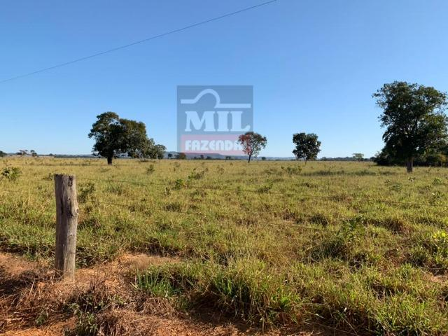 Fazenda 22 Alqueires (106 hectares) Nova Xavantina-MT - Foto 5