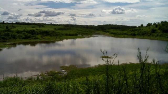 Bela fazenda de 157 hectares com gado leiteiro em Aguá -Branca -Pi