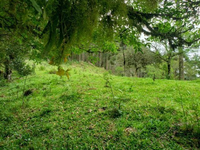 Lindo Sítio com Vista Para o Vale Rio Rufino/Urupema - Foto 2