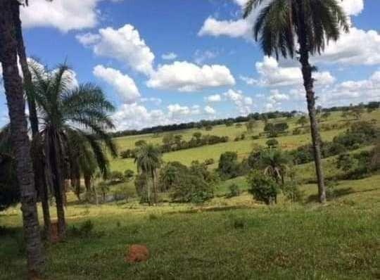 Oportunidade - Linda fazenda á venda R$850 mil . 700 hectares! Possibilidade parcelamento - Foto 2