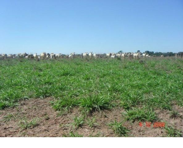 1200 hectares, pecuária, Diamantino-MT, troca-se por imóveis em MT - Foto 7