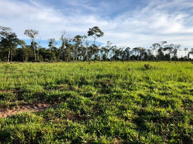 68 alqueires, 58 alqueires de pasto, Nova Marilãndia-Pecuama-MT - Foto 12