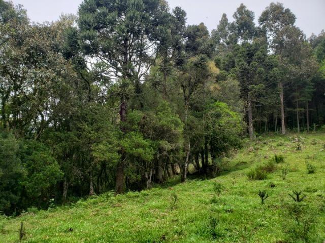 Lindo Sítio com Vista Para o Vale Rio Rufino/Urupema - Foto 10