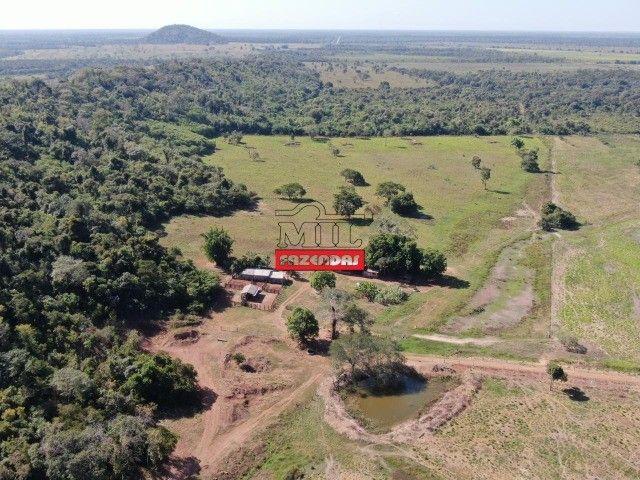 Fazenda 150 Alqueires ( 726 hectares ) Formoso do Araguaia-TO - Foto 11