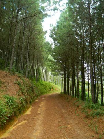 Área com 38 hectares linda