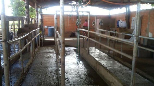 Bela fazenda de 157 hectares com gado leiteiro em Aguá -Branca -Pi - Foto 4