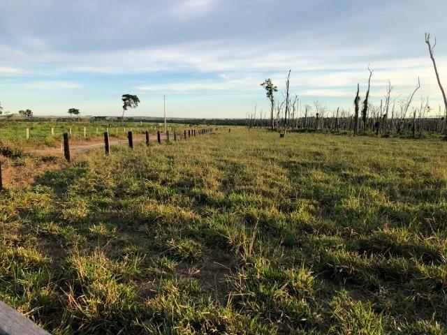 68 alqueires, 58 alqueires de pasto, Nova Marilãndia-Pecuama-MT - Foto 4